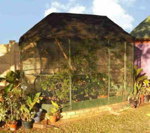 Aviary set up for chameleons in South Africa