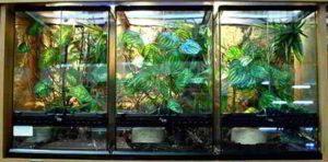 glass chameleon cage