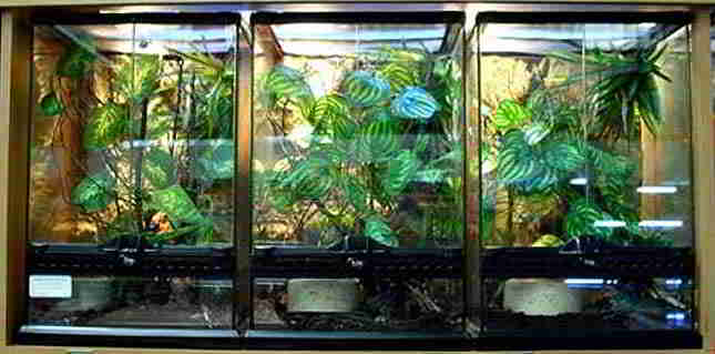 How To Choose The Best Chameleon Cage